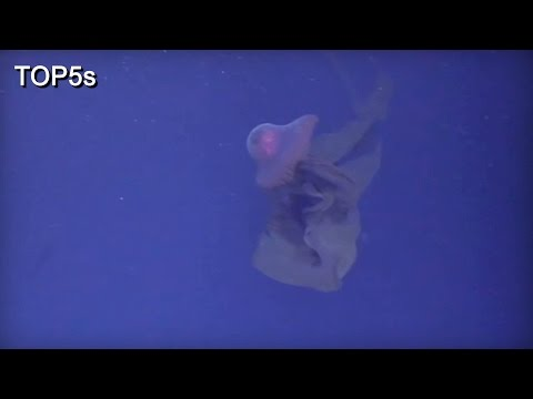 5 Most Fascinating & Interesting Creatures In The Ocean