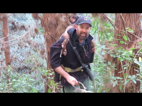 Hunting Wild Pigs With Dogs And Knife In NZ