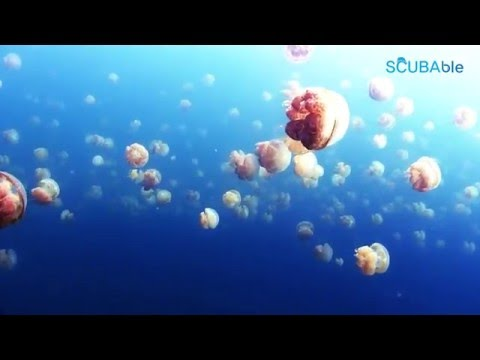 Sea to Sky   Dive in Palau 2015