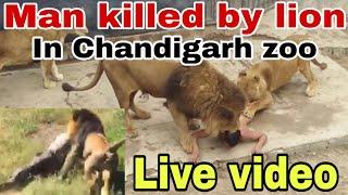 Download Video Chattbir zoo incident - ਮੌਤ ਦੀ Live ਵੀਡੀਓ || Man killed by Lion || The Khalas TV MP3 3GP MP4