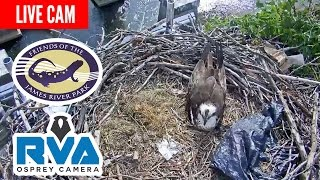 RVA Osprey Cam Presented by Friends of the James