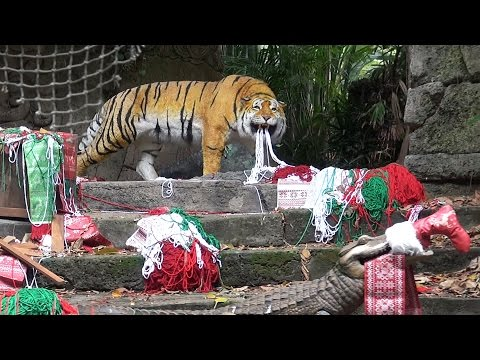 Jingle Cruise 2015 Full Ride at Disneyland, Jungle Cruise Holiday Version with New Decorations