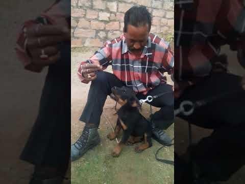 Vikram Singh motish cazri Jodhpur