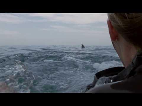 Над глубиной: Хроника выживания / Cage Dive (2017) Дублированный трейлер HD