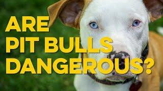 The Dangers of Pit Bulls
