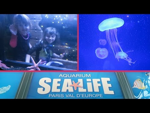 [VLOG] L'Aquarium SEA LIFE nous a médusés ! - Studio Bubble Tea visiting Sea Life Paris