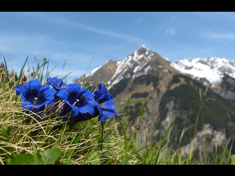 """Relaxing Music: Peaceful Instrumental Music, """"Nature's Landscapes"""" by Tim Janis"""