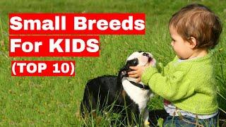 10 Small Dog Breeds For Kids (Children)