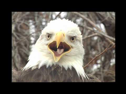 Soar Like An Eagle by Christ Ties Gospel Group