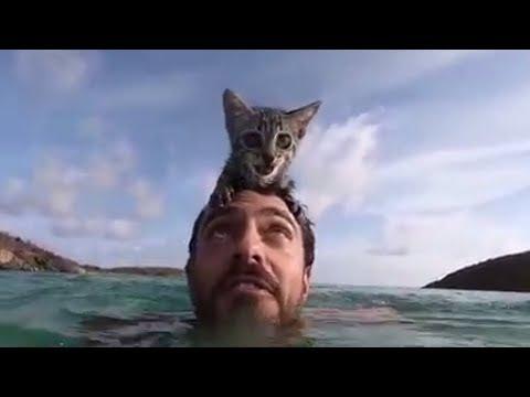 Кошка обожает плавать гуляет за 3 октября