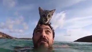 Кошка обожает плавать, гуляет на поводке и ведет себя, словно преданный пес