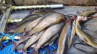 Лучшая рыбалка с АЭРОЛОДКОЙ Горная река золотой корень и Сибирский хариус Аэроглиссер через завал