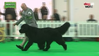 On day one on West of England Ladies Kennel Society championship do...