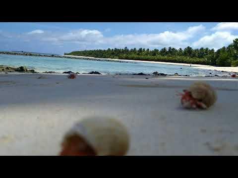 Trannies beach Cocos islands 🦀