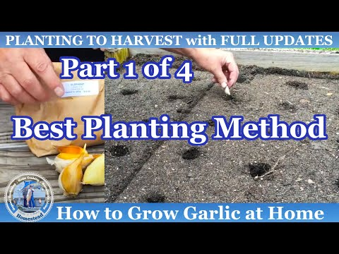 HD How to Grow Fall Garlic (Part 1 of 4)