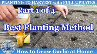 HD How to Plant and Grow Fall Garlic