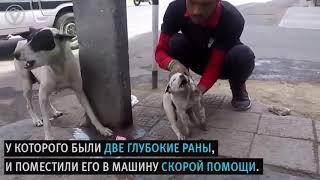 Собака мать звала людей на помощь, чтобы спасти своего щенка