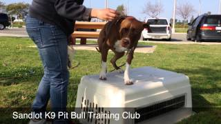 Dog Obedience Training Los Angeles & San Diego | Sandlot K9 Services Pit Bull Club