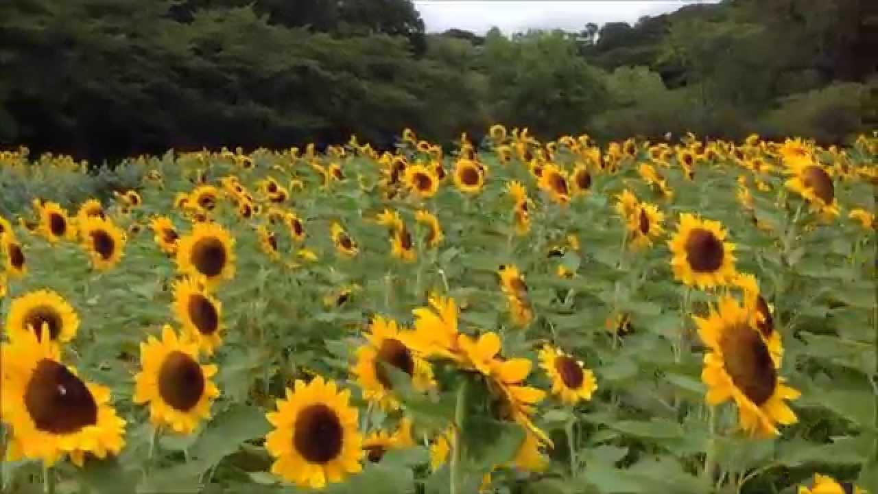フラワー パーク 浜松