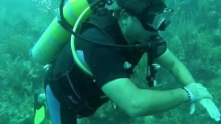 Barriera corallina cuba