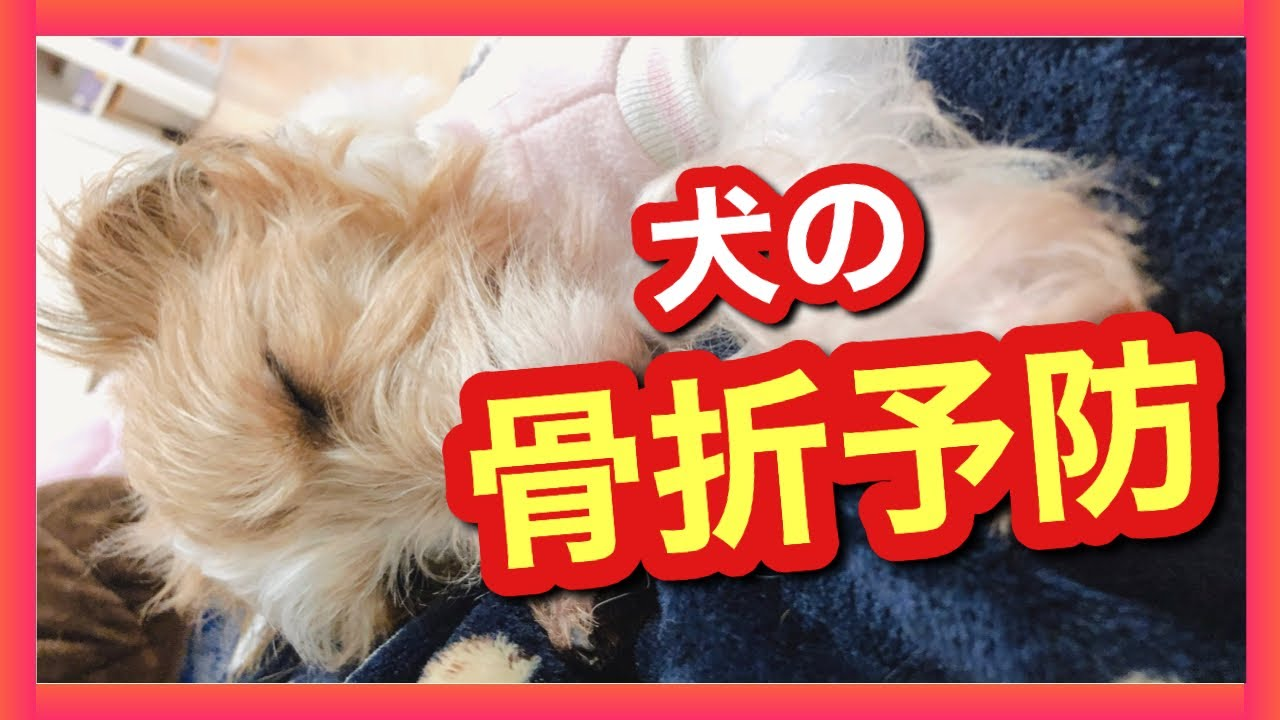 【犬の骨折】原因と予防方法について考える
