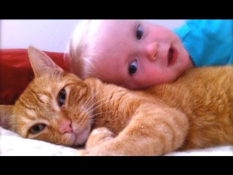 Cats, Dogs And Adorable Babies Compilation [NEW]