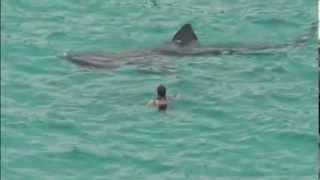 ★★★★★ Surpris par un Requin immense pendant la baignade ! thumbnail