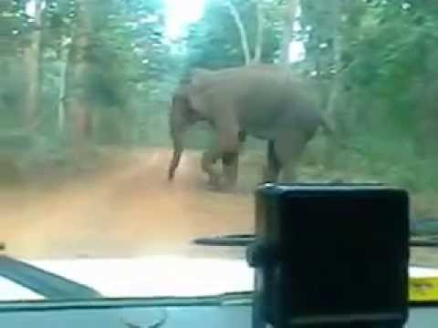 Elephant attack video, Barehipani falls, Simlipal National Park, Mayurbhanj, Odisha, India