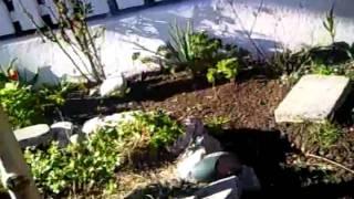 Rotte i hagen.mp4