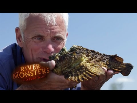 The Venomous Stone Fish | STONE FISH | River Monsters