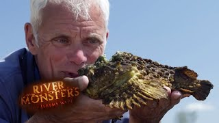 The Lethal Stinging Stone Fish - River Monsters