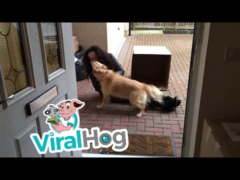 Dog Gets one Sweet Surprise || ViralHog