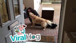 Funny Video: Girl Surprises Her Childhood Dog With a Surprise Visit