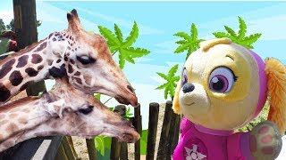 Paw Patrol Skye Visits Zoo and Learns Animals with Giraffes and Flamingos