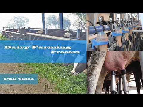 Dairy Farming Process