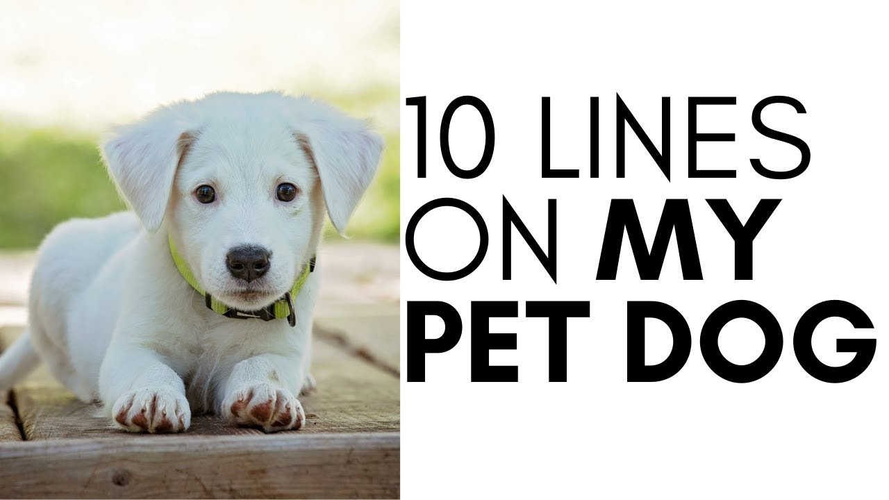 10 Lines On Dog In English Youtube
