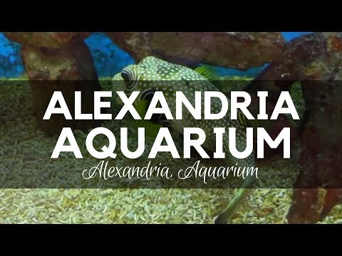 Alexandria Aquarium in Egypt - Species from the Mediterranean and Red Seas, the Nile, and the Amazon