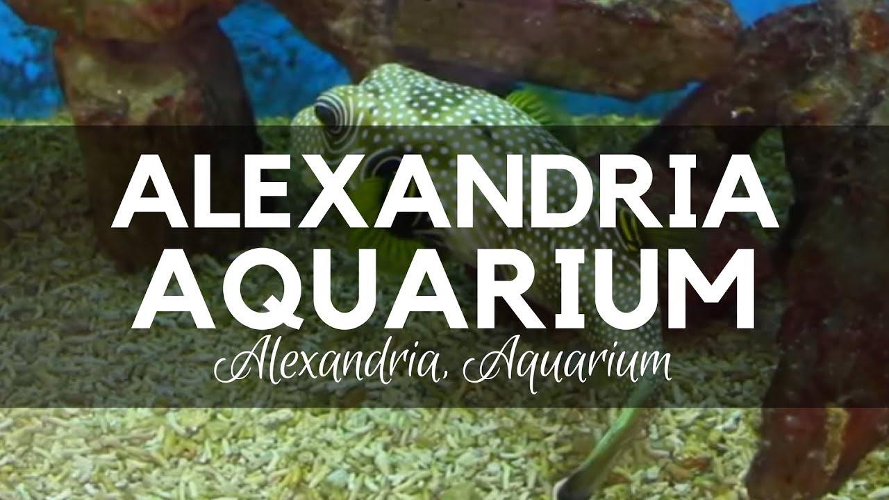 Alexandria Aquarium in Egypt - Species from Different Waters