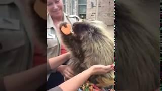 Teddy Bear the Porcupine Makes a New Friend