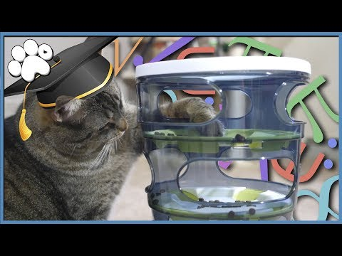 CAT IQ TEST - How Smart Is Our Cat?