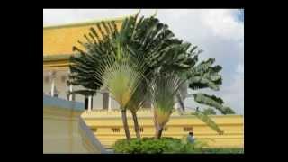 видео Удивительные деревья