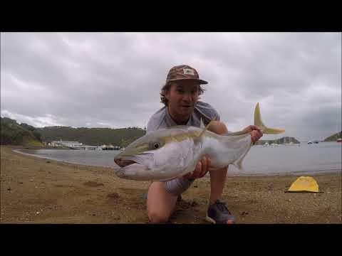 Kingfish On A Popper In 1m Water!! | Moocher Hunters Backyard Mish Part 1