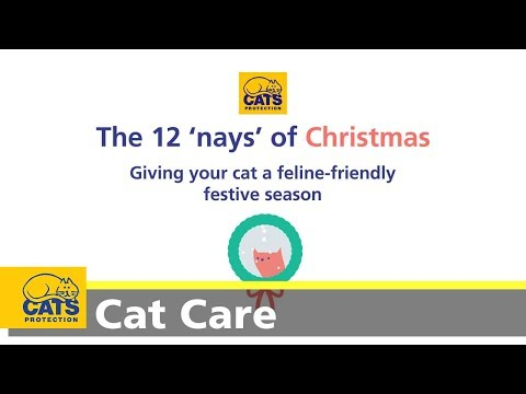 12 nays of Christmas - cat care tips for a feline-friendly festive season
