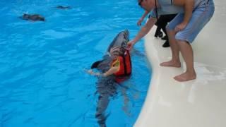 Плавание с дельфином. Коктебель - 2016.