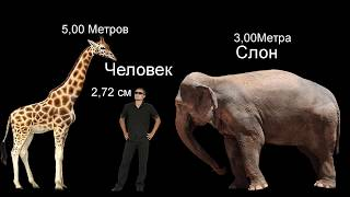 Сравнение Животных,Трансформеров и Людей по высоте