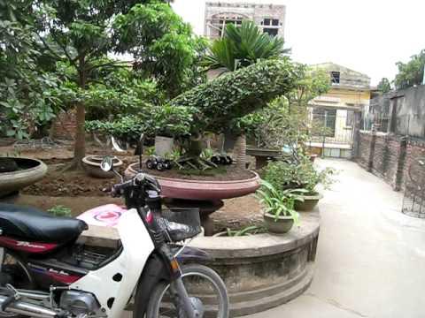 clb cây cảnh đẹp - cây Bonsai đẹp  độc đáo việt nam.AVI