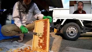 ハチミツをしぼってみた thumbnail