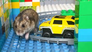 Hamster OBSTACLE COURSE MAZE 😱🐹😱 Hamster in Lego Labyrinth Robot