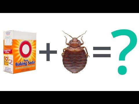 Bed Bug Faq Can Baking Soda Kill Bed Bugs