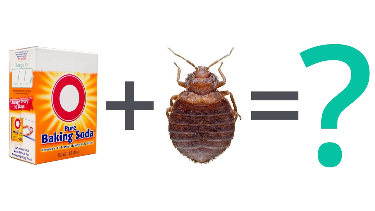 Bed Bug FAQ: Can Baking Soda Kill Bed Bugs?   YouTube